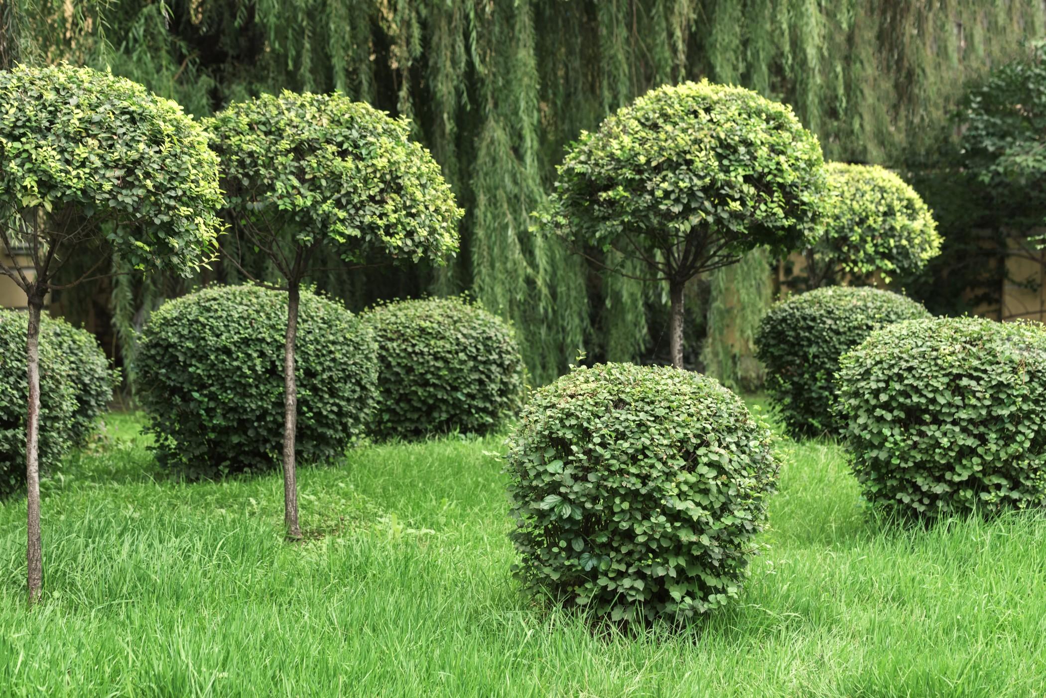 jardins-arbuste-taillés